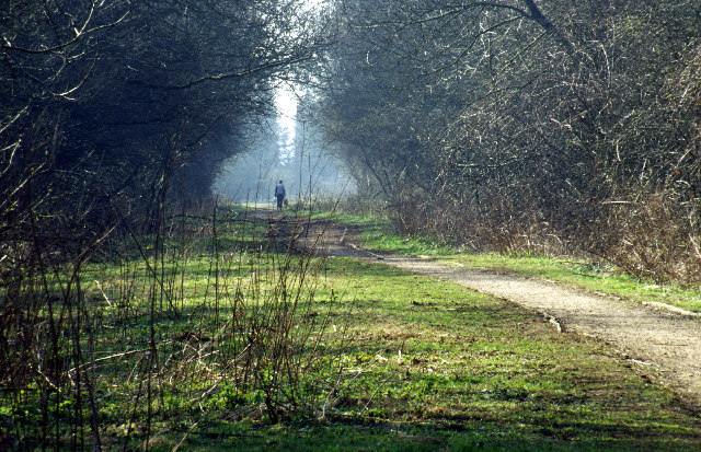 Old railway south of South Wigston
