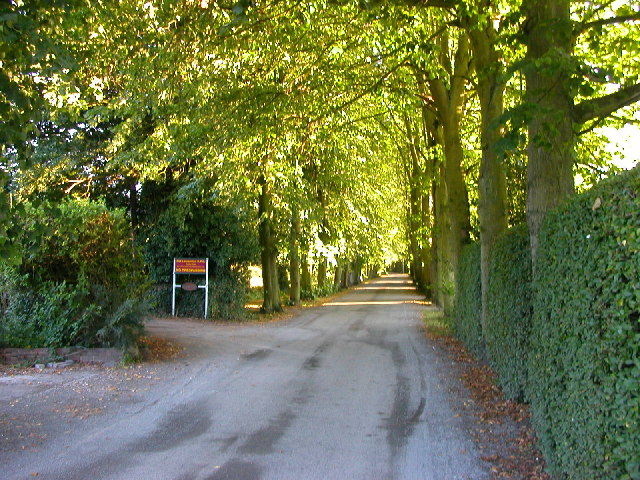 Bilton-Lime Tree Avenue