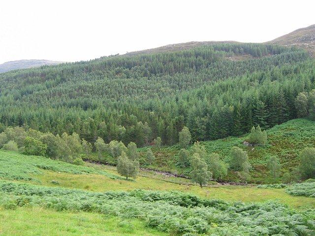 Forestry, Gleann Marcasaidh.