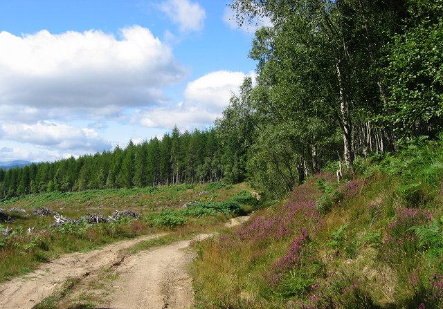 Mellness Forest