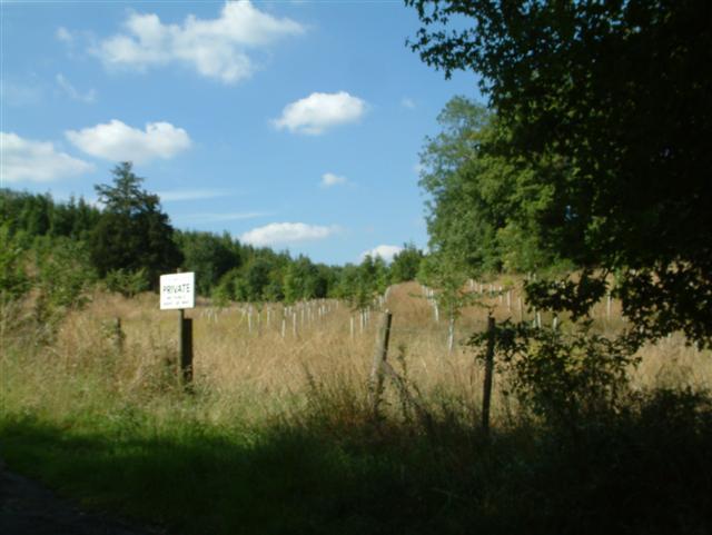 Jubilee Plantation