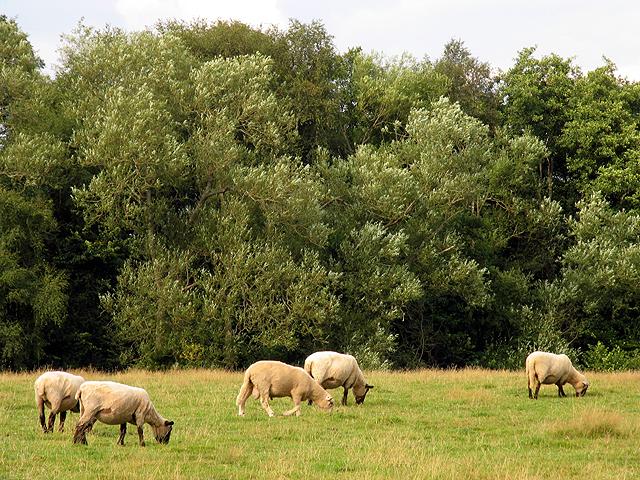 Pasture near Newtown