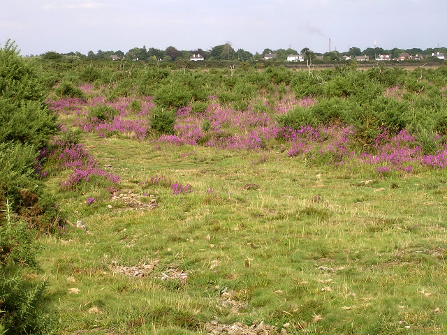 Bagshot Moor, East Boldre, New Forest