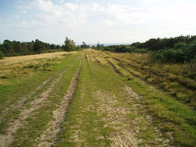Ashdown Forest - Long Walk