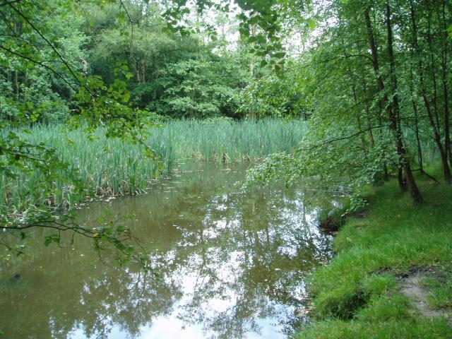 Fishing Pools at Mill Brook