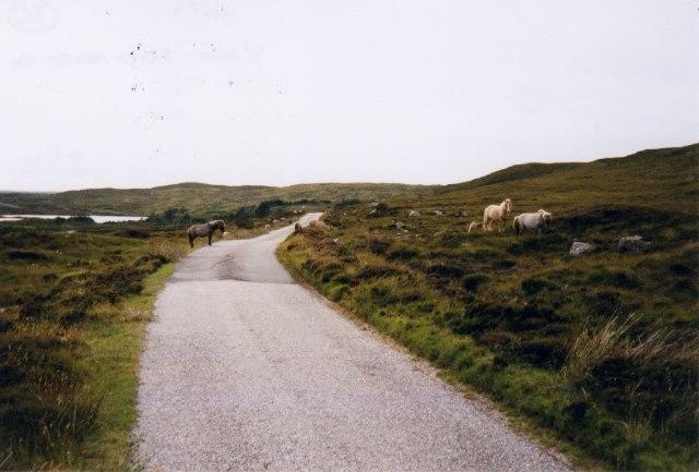 Eriskay ponies on the bogs near Loch Sgioport