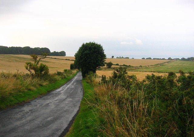 Lane, D'Arcy