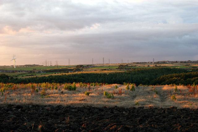 Burn Plantation