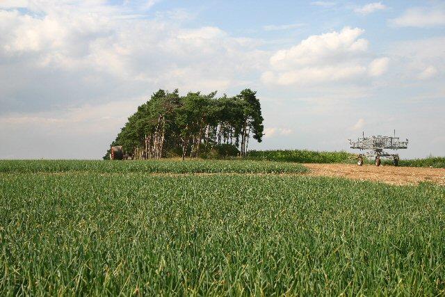 Near Tuddenham Corner, Suffolk