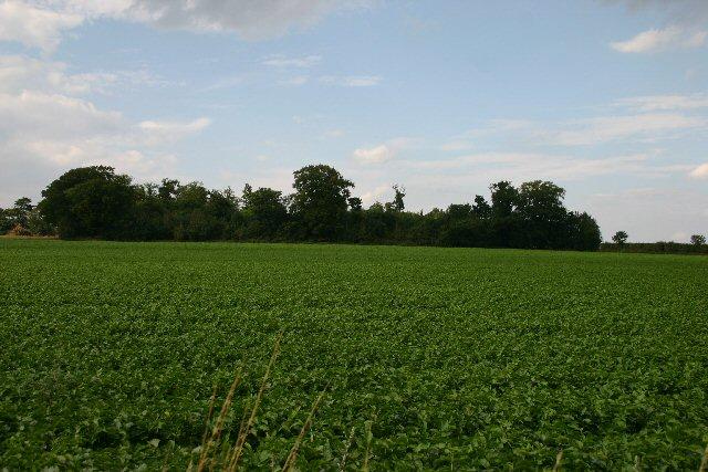 Farmland north of the A14 at Barrow