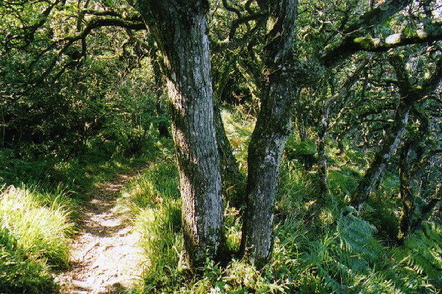 Parkham: Sloo Wood