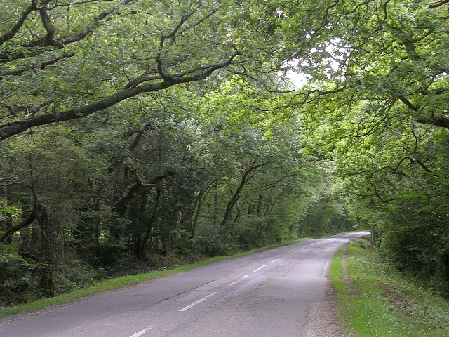 Road on the edge of Ashen Wood, Beaulieu, New Forest