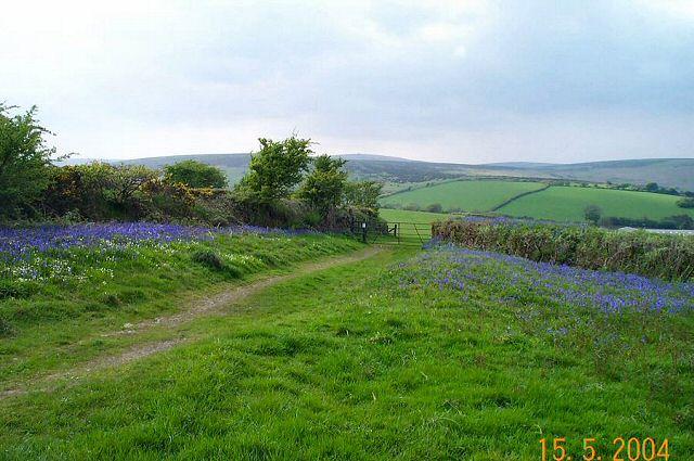 Near Dockwell - Dartmoor