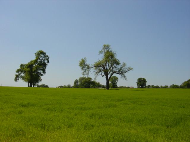 Farmland nr Raby