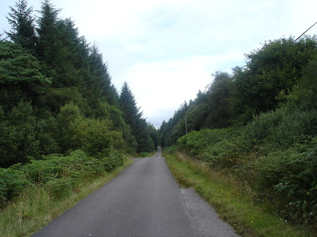 Road through Forest, Kintyre