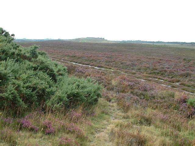 Hartland Moor National Nature Reserve