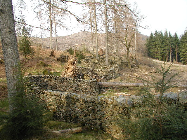 """""""Taking a Wall for a Walk"""" - Grizedale Forest"""