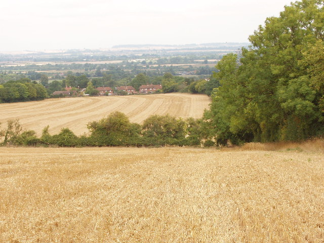Cornfields above Bledlow and the Plain of Aylesbury