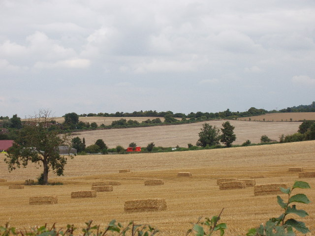 Cornfield and harvest, at Hemley Hill