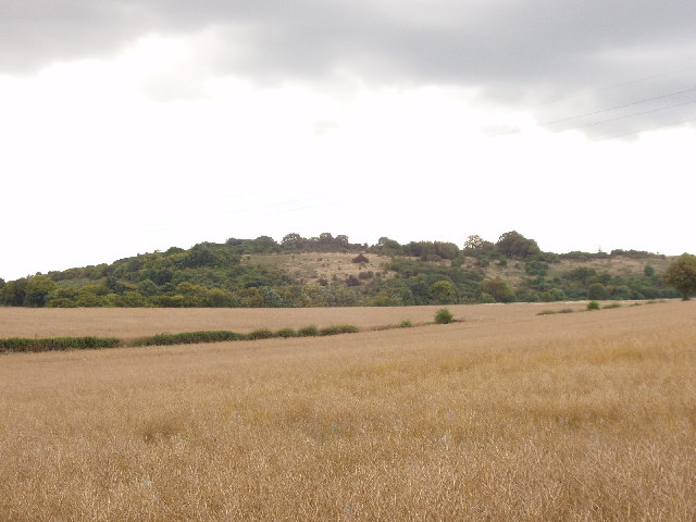 Corn fields near Saunderton, and Lodge Hill