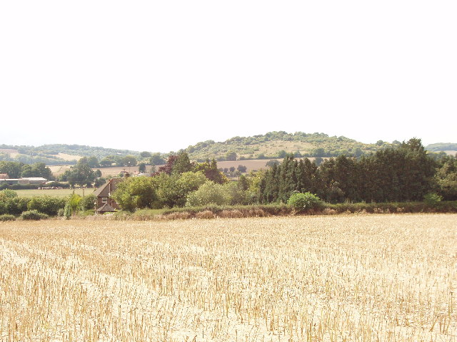 Cornfield below Loosley Row, and view to Lodge Hill