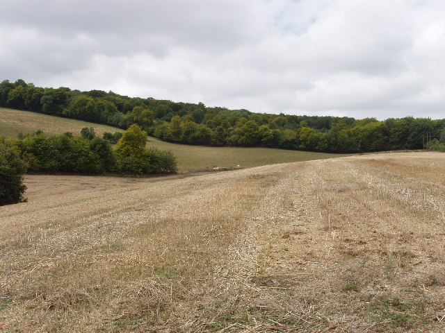 Cornfields and woods near Wain Hill
