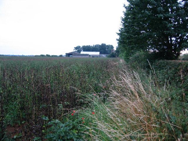 Countryside near Teigh, Rutland