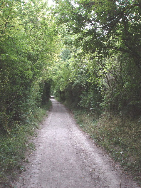 Bridleway with elder trees above Bledlow