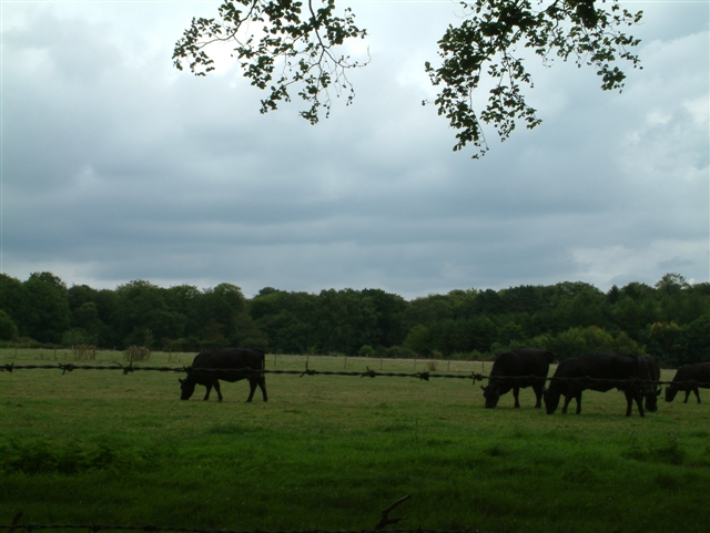Grazing Land in front of Rumerhedge Wood