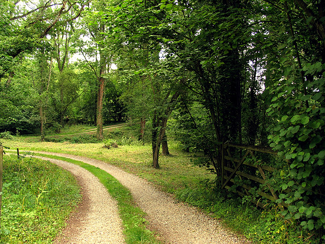 Upper Berry Wood near Ecchinswell