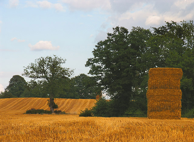 Harvested Farmland near Brocks Green