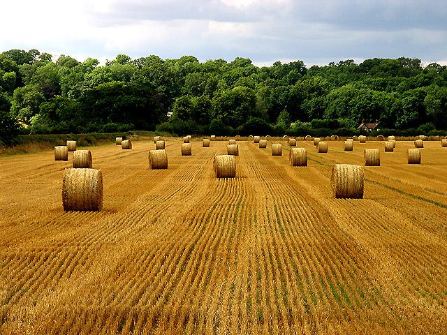 Harvested Land near Ufton Wood
