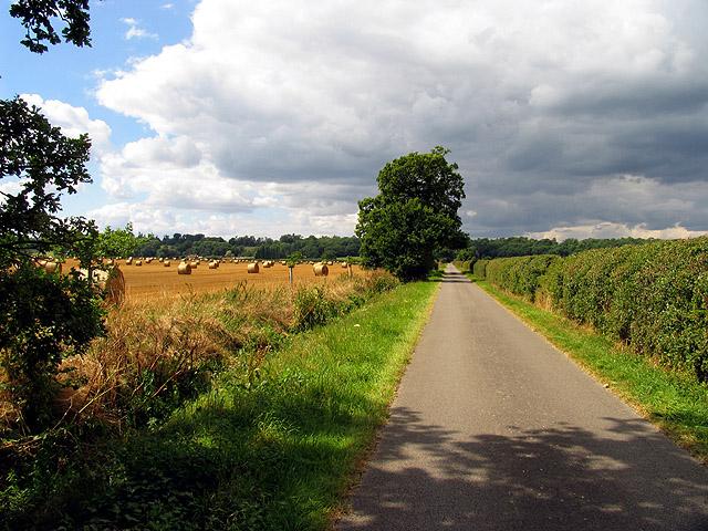 Lane looking towards Lambdens Wood