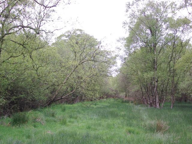 Lawkland Moss