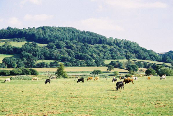 Colyton: a view of Hawkesdown Hill from the A3052 at Colyford