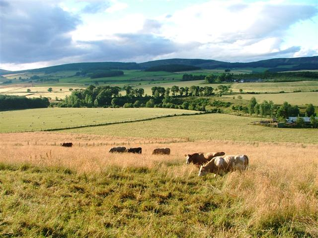 Pasture at Whitehill