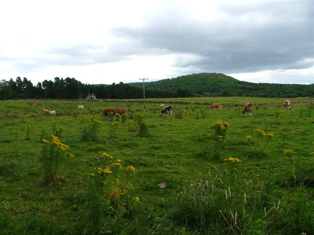 View of Pasture Towards Mulloch