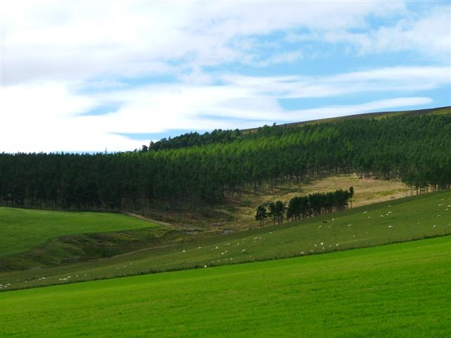 Davoch Plantation