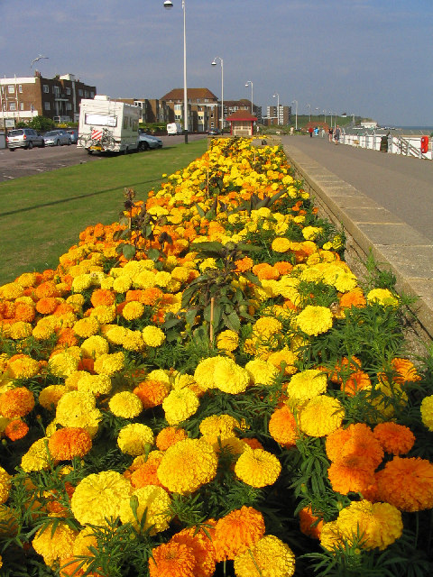 Floral display, Bexhill Promenade, Sussex