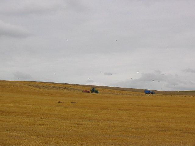 Field, Nr. Silbury Hill