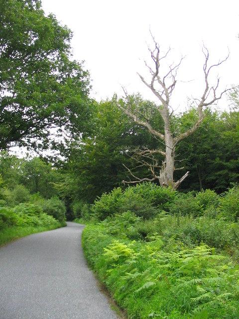 Road To Stitchcombe