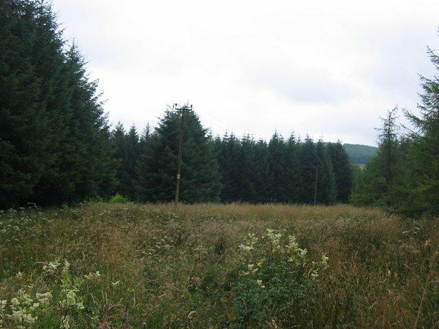 Forest, Dalgliesh.