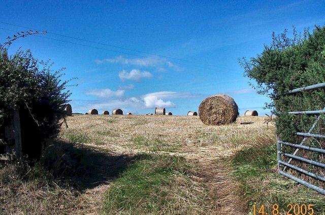 Round bales near Dunsford