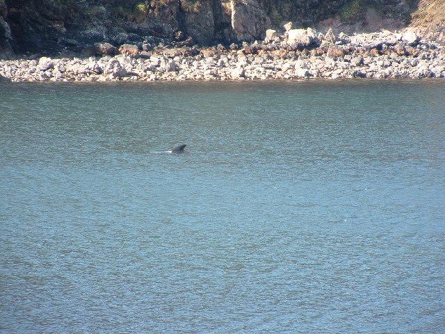 Tarbert bay Whale