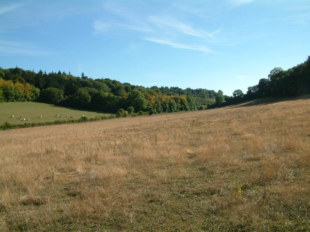 Shoreham Woods, near M25 junction 4