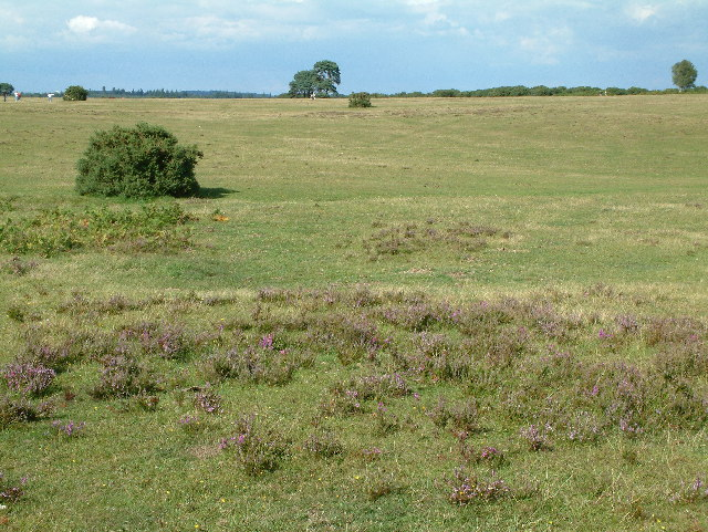 Wilverely Plain, New Forest