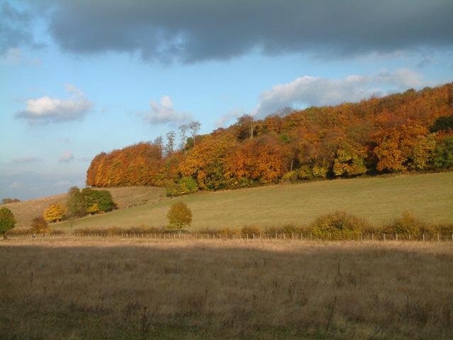 Meenfield Wood