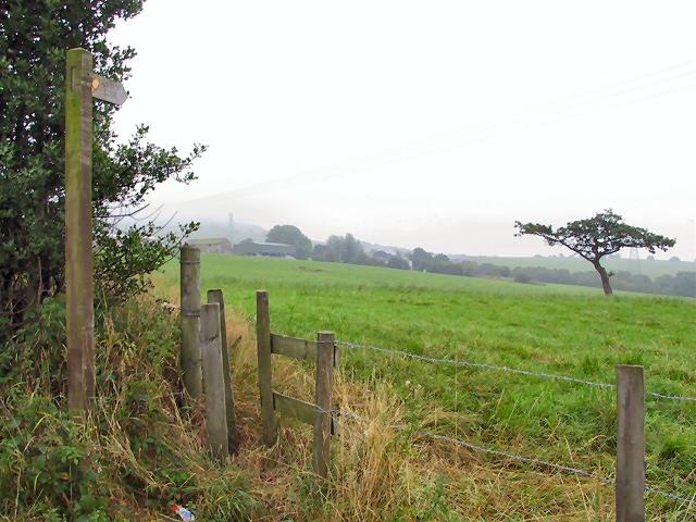 The Matley Oak