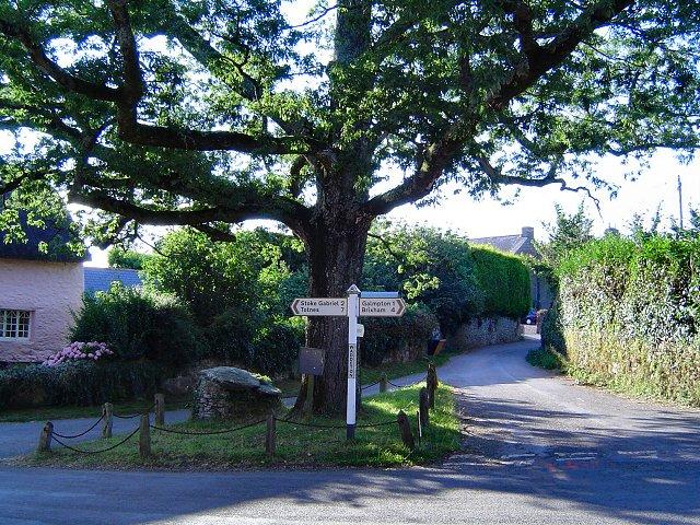 Waddeton oaktree