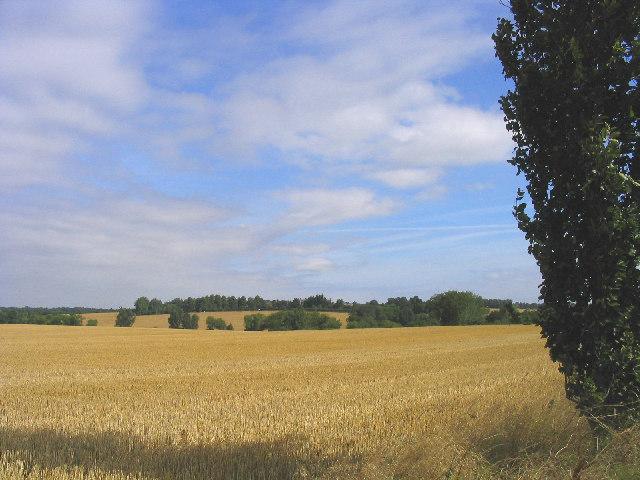 Wheatfields, Mountnessing, Essex